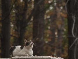 gatto macchiato di strada sulla strada d'autunno foto