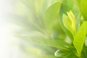 natura albero verde foglia fresca su bellissimo bokeh morbido sfocato foto