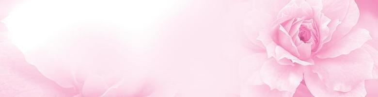 rosa pastello rosa rossa bella primavera fiore fioritura ramo sfondo foto