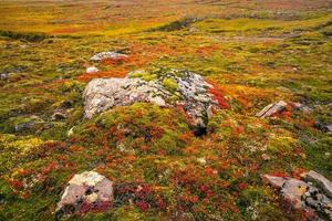 bellissimo paesaggio naturale in autunno foto