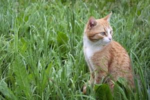 il gatto è seduto nell'erba bagnata foto