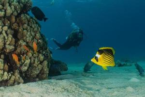 barriera corallina e piante acquatiche nel mar rosso, eilat israele foto