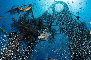 pesce leone nel mar rosso pesce colorato, eilat israele foto