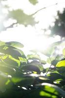 sfondo verde naturale, sfondo verde foto