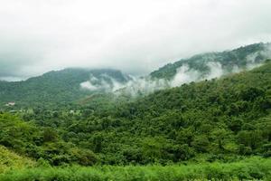 paesaggio di montagna della foresta con nebbia nella campagna della thailandia foto