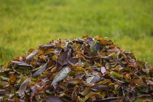 mucchio di foglie autunnali sull'erba erba verde foto