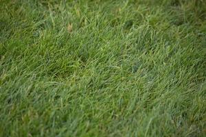 sfondo di erba verde foto