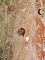 tronco di corteccia di albero naturale foto