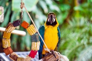 dolce animale uccello colorato pappagallo tropicale esotico foto