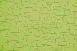 superficie di struttura del legno verde incrinata e rigonfiata foto