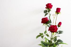 rose rosse nel vaso di fiori foto