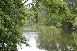 bella canna di palude d'erba che cresce sul bacino idrico della riva foto