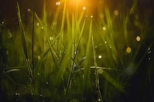 rugiada sull'erba sfondo verde foto
