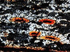 micrografia di cellule distrutte foto
