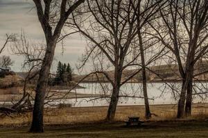 piccolo fiocco spunta tra gli alberi foto