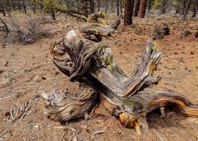 strana formazione di tronchi lungo fr480 vicino a tumalo o foto
