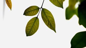 primo piano bella vista della natura foglie verdi su vegetazione sfocata foto