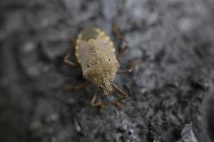 macro di un insetto rosso foto