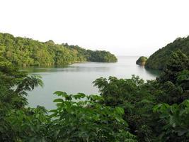 la natura dello stretto di Lembeh. foto