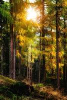 autunno nella foresta foto