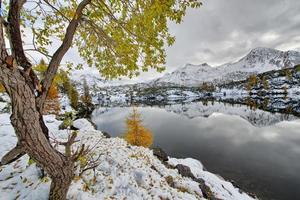 larice foglie autunnali vicino al lago alpino foto