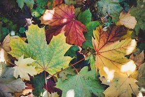 dettagli delle foglie appena cadute in autunno foto