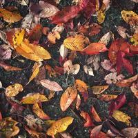foglie autunnali bagnate cadute sul marciapiede foto