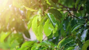 foglie degli alberi bagnate dopo essere state esposte alla pioggia al mattino foto