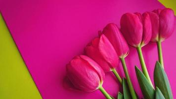 tulipani rosa su sfondo rosa. immagine spazio testo foto