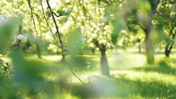 bellissimo parco primaverile - colori verde brillante foto