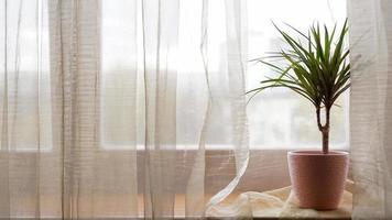 palma in vaso di fiori sul davanzale di casa foto