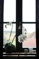 vaso di fiori vicino a una grande finestra. orchidea bianca sul davanzale foto