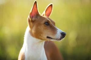 cane rosso muso fotografato primo piano foto