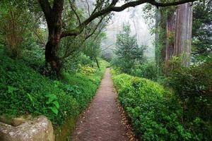paesaggio con alberi nella foresta foto