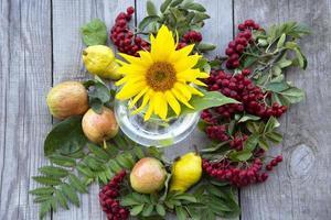 girasole, ramo di sorbo con bacche e foglie, mele e pere giacciono foto