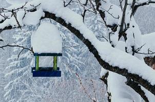 mangiatoia per uccelli su un albero in caduta di neve foto