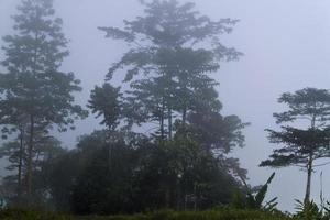 foresta nebbiosa al mattino foto
