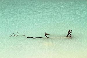 legname galleggiante nel lago verde foto