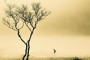 albero e superficie nebbiosa foto