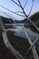 rami secchi e legni sulla riva foto