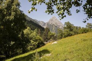 il bellissimo paesaggio della foresta di montagna foto