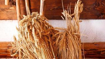 spighe dorate di grano su un fondo di legno. orecchie per fare la farina foto