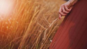 donna in un campo di grano, donna tiene in mano una spiga di grano foto