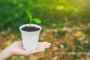 concetto di giornata mondiale dell'ambiente. mano che tiene la pianta in vaso. foto