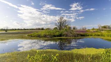 albero alto in mezzo a terre paludose circondato da alcuni fiori di campo foto