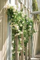 bella parete in legno con rose bianche foto