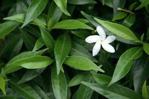 fiore solitario nel fogliame foto