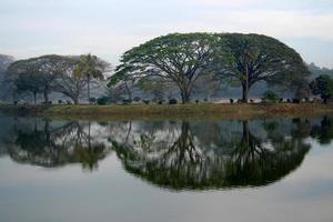 alberi e riflesso foto