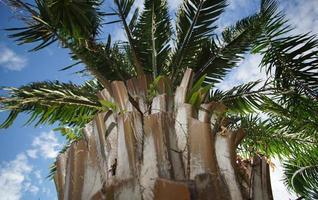 tronco di palma nel delta del mekong, vietnam foto