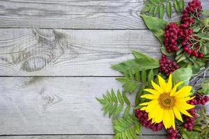 sfondo naturale. bacche di sorbo e fiore di girasole su uno sfondo foto